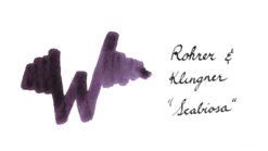 Rohrer and Klingner Ink Scabiosa